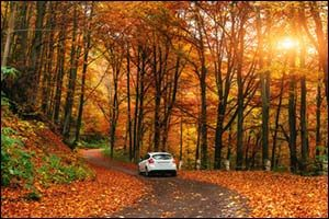 Prepare Your Vehicle for Autumn Conditions